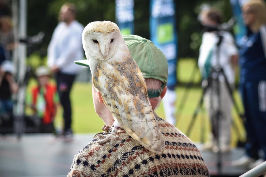 NatSeriesFinal2015-owl bloke 2